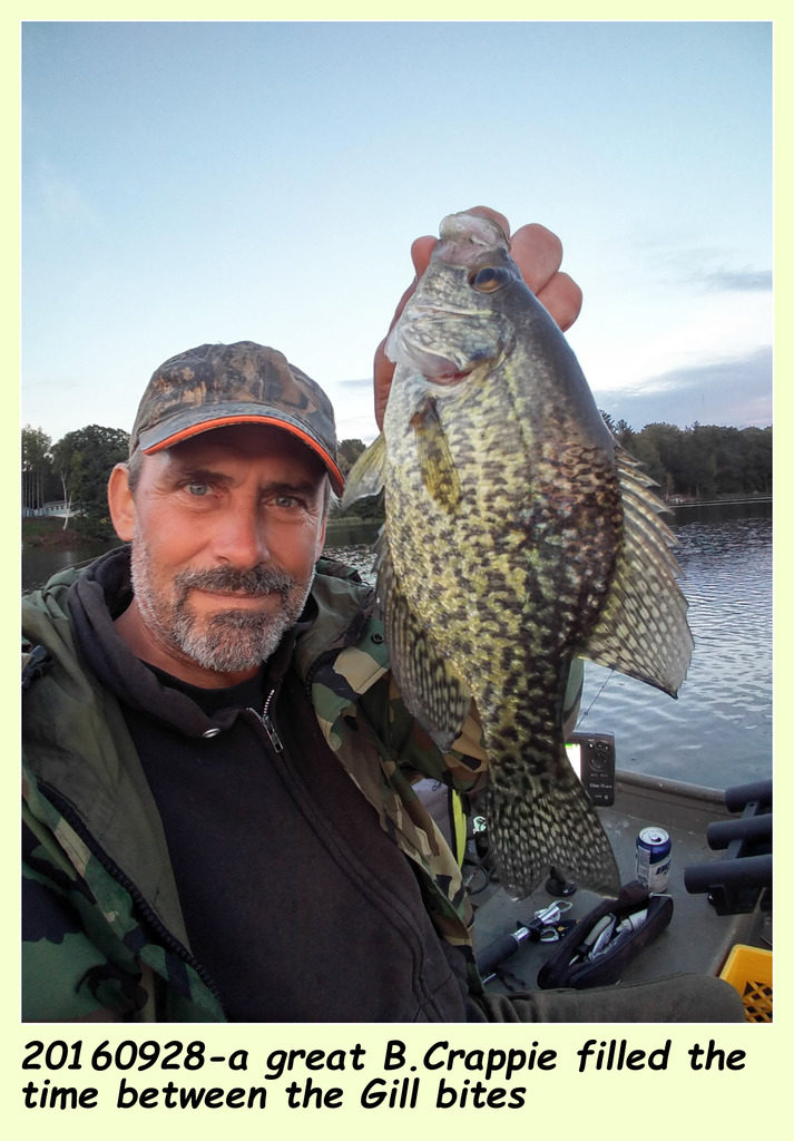 20160928-a great B.Crappie filled the time between the Gill bites