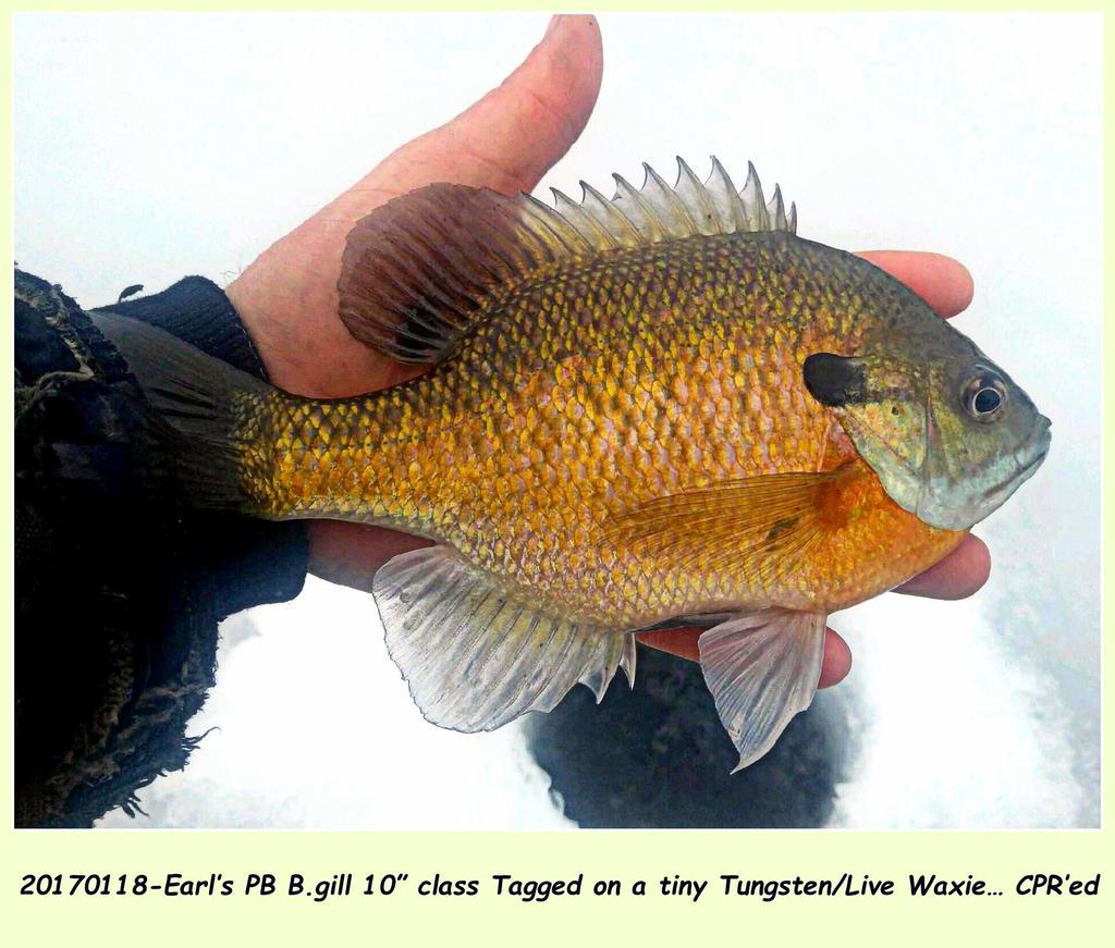 "20170118-Earl's PB B.gill 10"" class"
