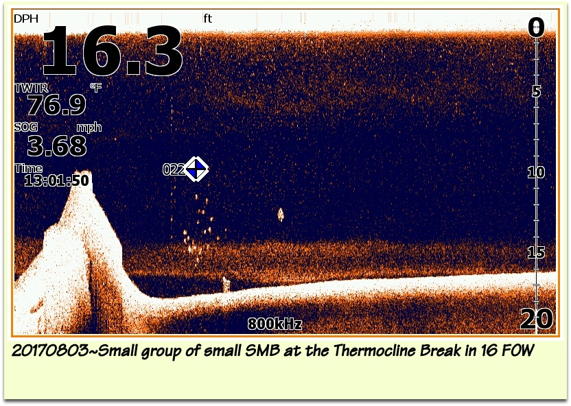 20170803~Down Scan Imaging of Small group of small SMB at the Thermocline Break in 16 FOW