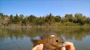 Spawn Fishing