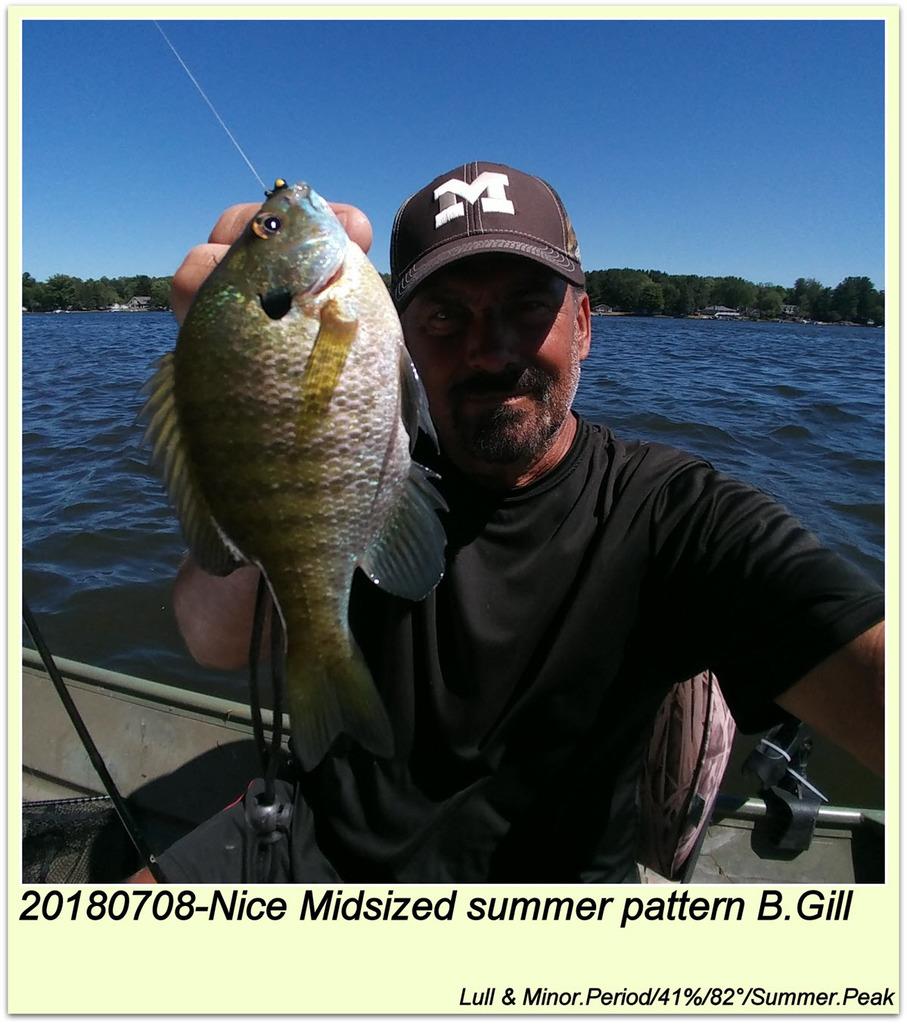 20180708-Nice Midsized summer pattern B.Gill