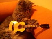 Ling-Guitar 002