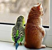 birdie and kittie