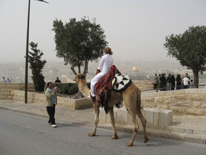 Camel rides on the Mount of Olives