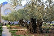 The Garden of Gethsemane and the Church of All Nations