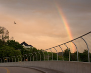 Rainbow, bridge, bird