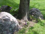 More fake green lichens