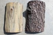 White pine samples