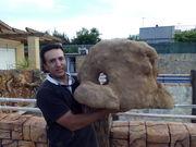 Foan stone