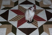 Sassy likes  this quilt