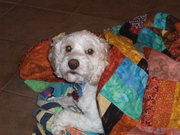 Mickey enjoying one of my quilts!