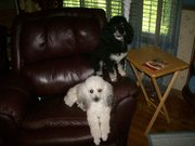 Skeeter and Ginger 6-20-2013