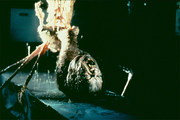 the_thing_-_john_carpenter