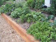 My garden pictures