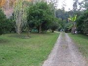 the shambhala fruit forest