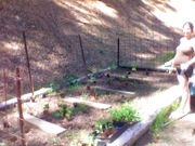 laying out the seedlings