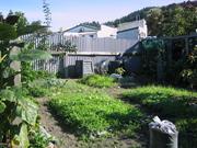 Bottom  of the vege garden
