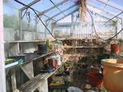 Partly cleared glasshouse 17/4/09