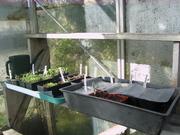 My seedlings