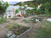 Vege garden 20:1:09