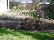 New vege garden