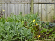 Spring Garden Pictures