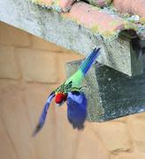 parrot flight5437