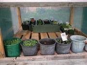 Garden.glasshouse.29Sep2011 007