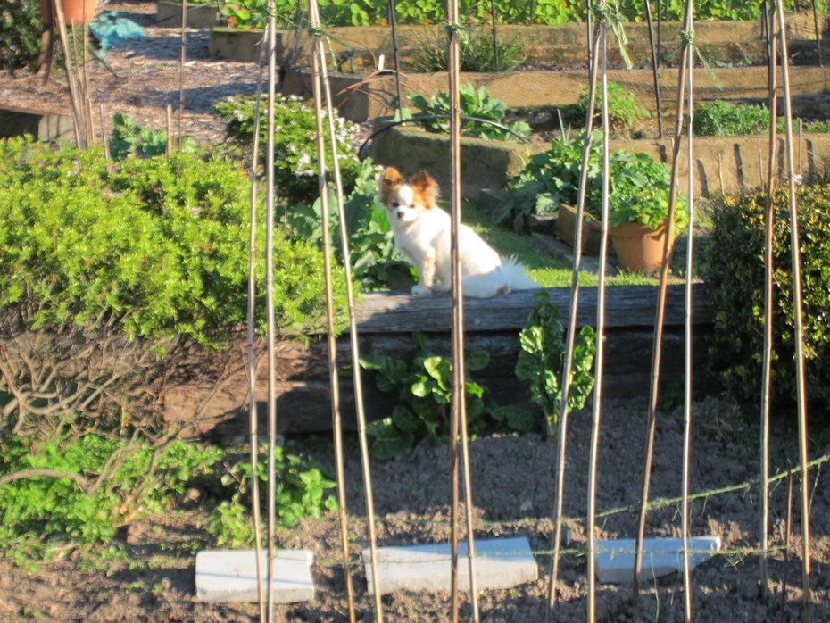Mama Missy - Garden Companion