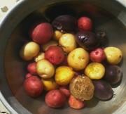 potato's i grew