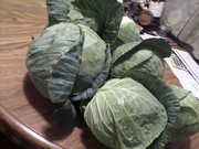 cabbage tony brought home 4162015