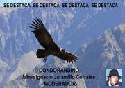 DESTACADO Condor Andino Soneto al Libro