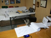 My cat studying the blueprints