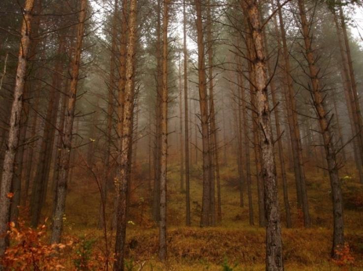 Δάσος   Υγεία Πλούτος Πολιτισμός - Forest Health Wealth Culture