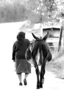 Εικόνες απτά Χωριά τσι Κρήτης - Images from the villages of Crete