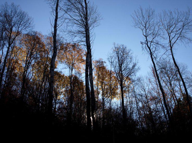Δάσος,ένα ελπιδοφόρο αύριο...