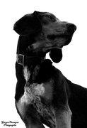 Πορτραίτο σκύλου στήν παλαιά πόλη της Ξάνθης