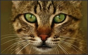 δυό πράσινα μάτια