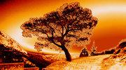 Orange view...!