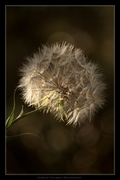 Άνθη και Φυτά - Flowers