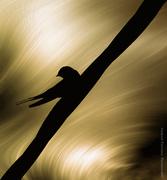Πουλιά-Birds