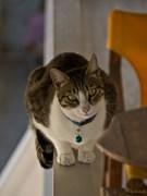 Ημέρα των ζώων....Η γάτα του γείτονα;-)