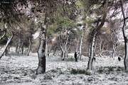 Χιονισμένη Πεντέλη
