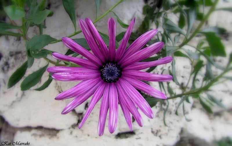 Deep purple...!