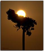 Sun-hug...