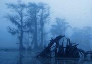 Foggy Caddo Lake, Texas