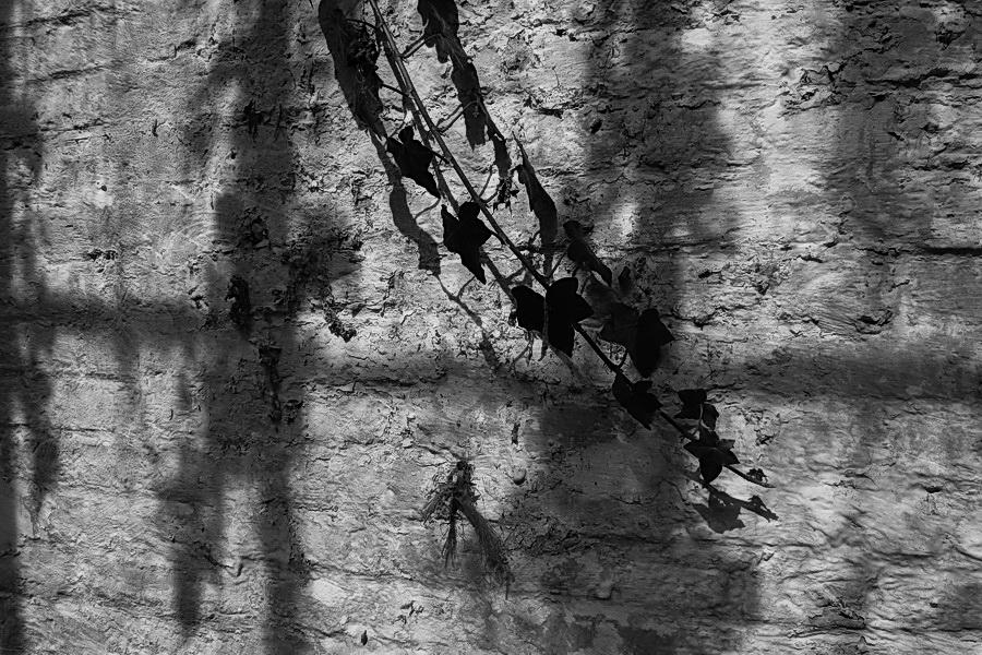 Σκιές ζωής
