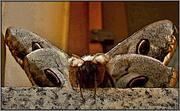 Η Περιπλάνηση Της Ψυχής-Πεταλούδας