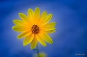 Flower in color