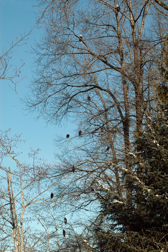 January 2012 on the Nooksack